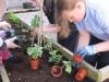 garden-planting-2012-2013-001