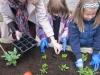 garden-planting-2012-2013-003
