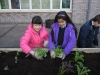 garden-planting-2012-2013-015